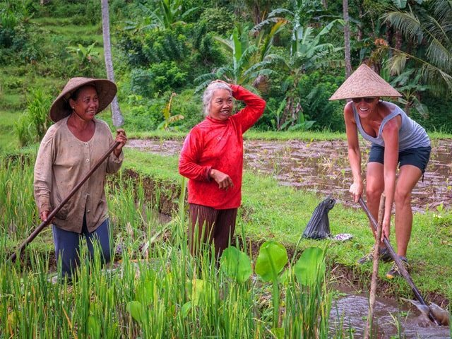 Mountain trekking in the ricefields