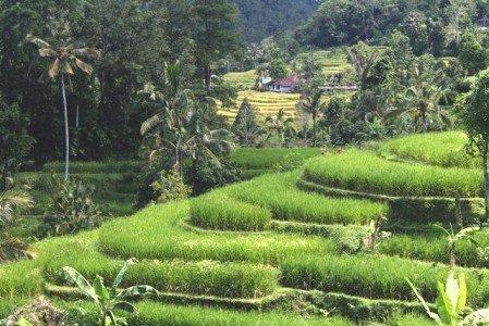 Exploring Tabanan Bali