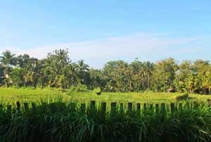 Sawah Resort for Yoga Retreats