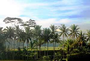 Soham Ubud Retreat Venue