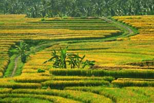 Traditional Village in Northern Bali